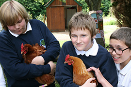 chickens children